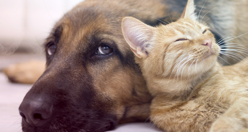 5 Dicas de como ter cães e gatos no apartamento